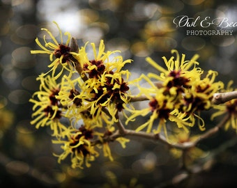 Yellow Tree with Bokeh Lights, Greeting Card, Blank  Inside, Fine Art Photography, Still Life,  5 x 7 Card
