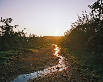 Sun Path, Orchard, Farm Photography, Agrarian Photography, Summer, New England Photography, Sunlight