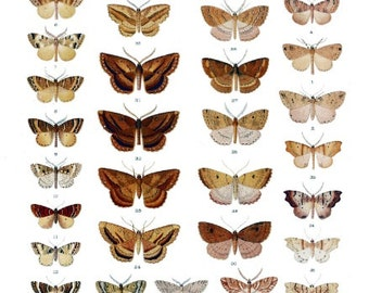 New Zealand Moth & Butterfly Chart 1898 Reproduction Art Print - 8.5x11