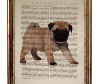 Pug Dog, beautiful Art Print on Upcycled Dictionary Book page 8'' x 10'' inches