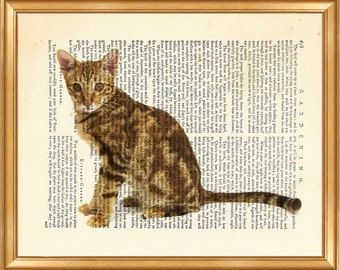 The Ocicat Cat DICTIONARY ART PRINT on Vintage Dictionary Page 10'' x 8'' from Antique Book