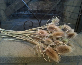 "12 Dried Natural Teasel on 16""-18"" stems. Rustic brown teasel stems, country decor, rustic wedding decor, Fall dried flowers"