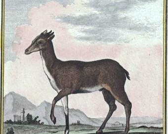 La Grimm Antelope. Published circa 1799 by Buffon. Antique Handcolored Engraving. Original Vintage Gift Idea, Natural History