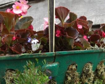 Day Lily Brass Garden Plant Marker