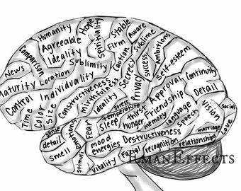 SALE Brain Phrenology Feeling Map Neuroscience Original Art Print Wall Decor (Structure, Function, Organization)