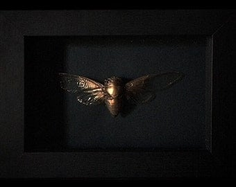 Blk Rose Gold Cicada