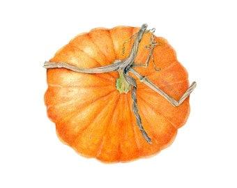 Pumpkin art print - Fall decor / Archival print of colored pencil drawing / botanical art