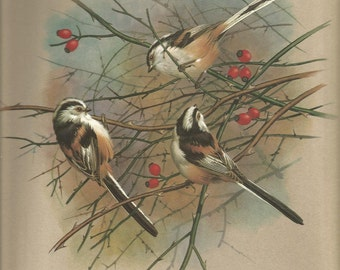 beautiful vintage 1965  long tailed tit signed bookplate print by basil ede great for framing.