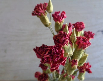 Dried Mini Carnations Preserved Spray Bouquet Bloom Bunch Bulk Bundle Wedding Flowers Wreath Candle Potpourri Lace Real Dry Floral Wild