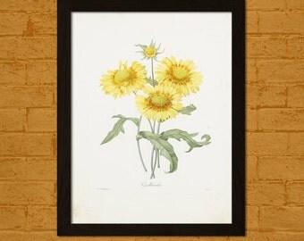 Get 1 Free Print - Vintage Gaillardia Print - Vintage Botanical Print Flower Print Romantic Wall Art Floral Illustration Flower Art Redoute