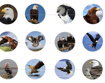 """Eagles 1"""" Inch Bottle Cap Images Digital Download - 12 images for a 4 x 6 Sheet Size Bald Eagle Golden Eagle Sea Eagle Harpy Eagle"""