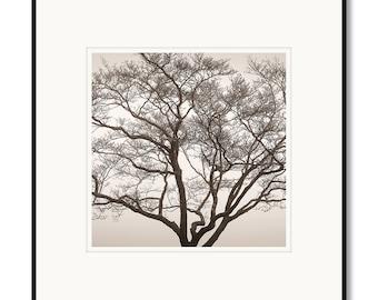 Dogwood tree in fog, Blue Ridge Parkway, Shenandoah, photography, black and white, sepia warm tone, framed photography, framed artwork