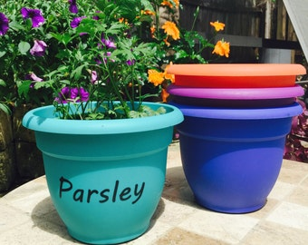 """Colorful Labeled Herb """"Parsley"""" Planter Pot"""