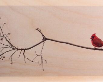 Red Bird, Red Berries