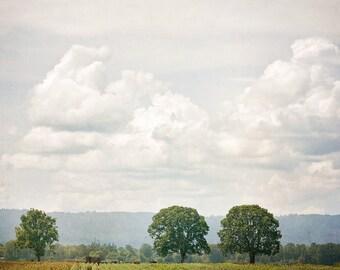 Rural Canvas Photograph, Farm, Rural, Photography, Wall Art, Square, 16x16, 20x20
