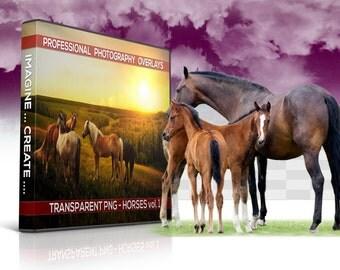 20 Horses Transparent PNG Animal Overlays, Photo Overlays, Photoshop Overlays, Photography Backgrounds, Digital Background, Digital Backdrop