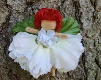 Fairy-White Carnation