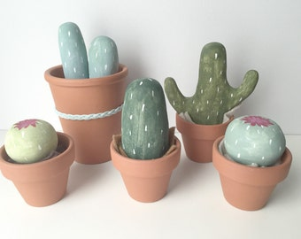cacti plants set of 5 (no fuss garden!)