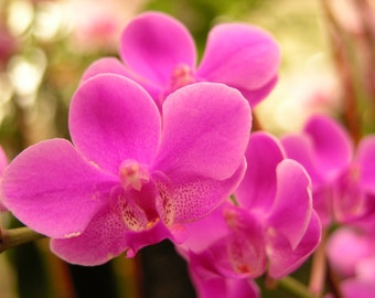 Pink Orchid Garden Photograph #42