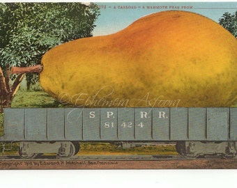 1910 Giant Pear Mitchell Postcard