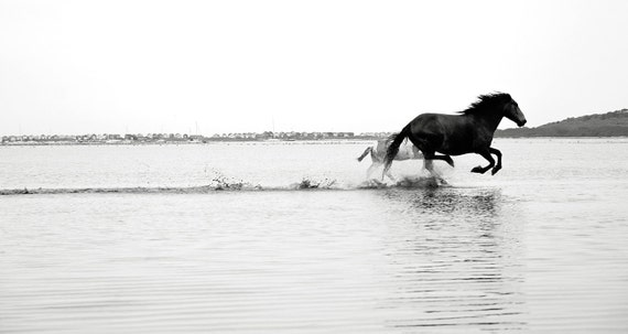Galloping On Water, horseart,equineart,horse prints,black and white print