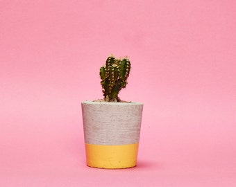 Concrete Planter, Cactus, Succulent Plant Pot, Handmade, Yellow, Small Size- Includes Cactus or Succulent