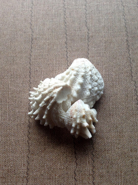 seashells for sealants