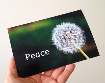 Peace and Dandelion ( 4'6 print )