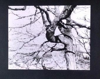 Original Black and White Photography Tree