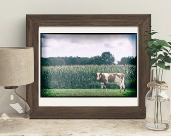 Farm Photography, Country Art, Rustic Farmhouse Decor, Cow standing in corn field, Wall Art, Home Decorations