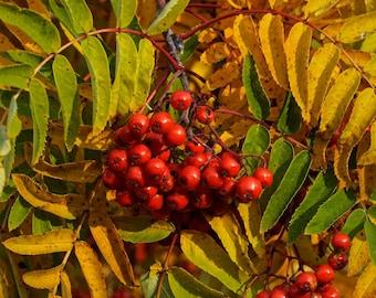 Autumn-Fruits kitchen-wall (red, yellow, autumn, fruits, autumn-colours, FineArt)