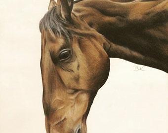 Custom Horse Pet Portraits