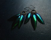plague ball - jeweled beetle wing chandelier earrings - natural taxidermy insect jewelry - blue green emerald shift earrings