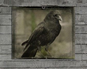 Vintage Crow Art, Gothic Raven, Eye Of Crow, Aged Hues, Vintage Colors, Urban Bird Print, Corvidae Photograph - Stare