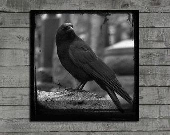 Crow Photograph, Animal, TTV, Gothic, Rook, Raven, Gothic Decor, Dark Blackbird, Monochrome, Black And White - One Crow