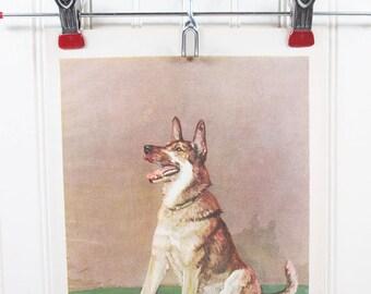 Vintage Dog Print German Shepherd Diana Thorne Color Illustration Book Plate
