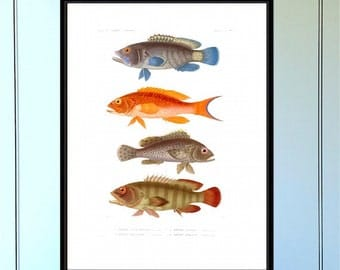 Fish Series (no.1) Antique Reproduction Print  coastal art wall art vintage print home decor antique print nautical print giclee