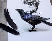 "corvid III - raven  - Original Giclee Edition Print - 13x19"""