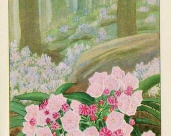Vintage 1926 Wild Flowers Nature's Garden Original Bookplate Illustration, Print, Pink Woods Laurel,  Natural Habitat Scene