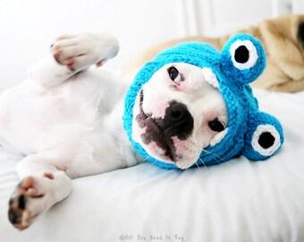 Dog Hat - Little Monster Hat - Pug Hat - Pet Clothing - Dog Clothing