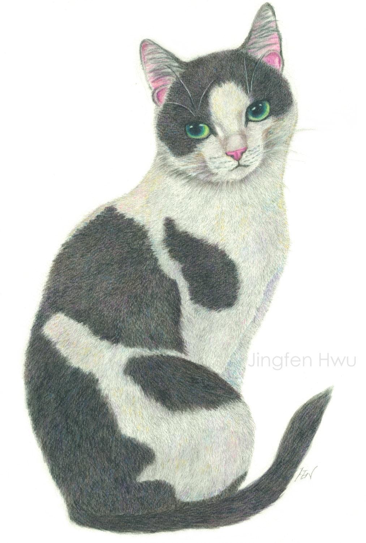 Cat Art Print An Elegant Tuxedo Cat Watercolor Pencil