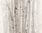 Aspen Trees Aspens White Colorado Forest Woods Rustic Cabin Lodge Photograph