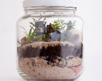 DIY Terrarium Kit - Everything You Need to Create a Lush, Green Desktop Micro-Environment - 1/2 Gal. Jar - Great Christmas Gift!