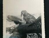 Vintage Photo - Black Dog Sitting on the Beach - Cocker Spaniel
