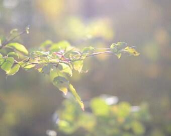 I heart fall autumn-glowing leaves-fall photography - autumn decor - autumn photo (8 x 8 Original fine art photography prints) FREE Shipping