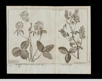 1737 Antique BOTANICAL print, flowers, original antique 276 years old