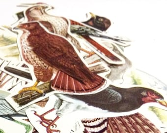 10 Vintage Birds - Hand cut clippings - 1960's Vintage paper cut-outs for collage or scrapbooking