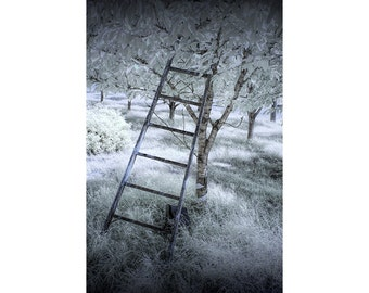 Ladder in a Cherry Orchard at the Cherry Point Farm Market near Shelby Michigan in Infrared No.0072 Summer Fine Art Landscape Photography