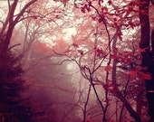 Morning Fog, Winter Tree Photo, Woodland, Forest, Spooky, Dark, Etheral, Branches, Print, Art, Home Decor, Wall Art, Red, tree photography