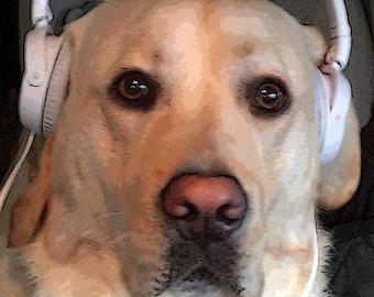 Yellow Labrador Dog Wears Beats Headphones Photograph Dog Card Yellow Labrador Portrait
